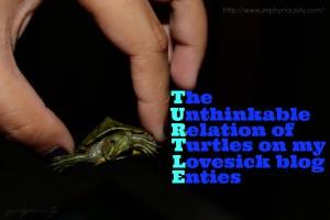 Turtle Zephyriousity