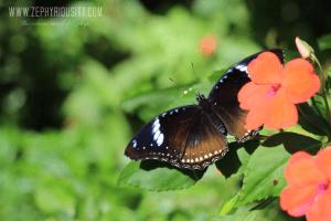 butterfly farm paradizoo