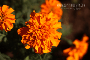 flora paradizoo
