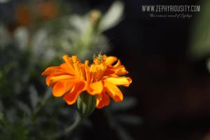 orange flower paradizoo