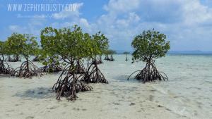 mangroves buntod reef masbate