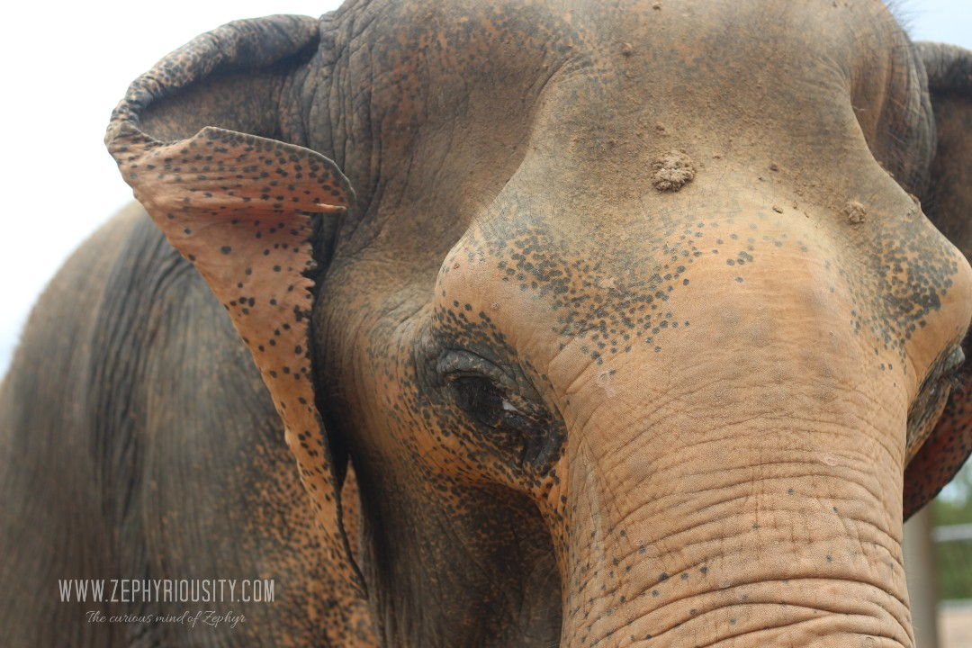 elephant at wfft