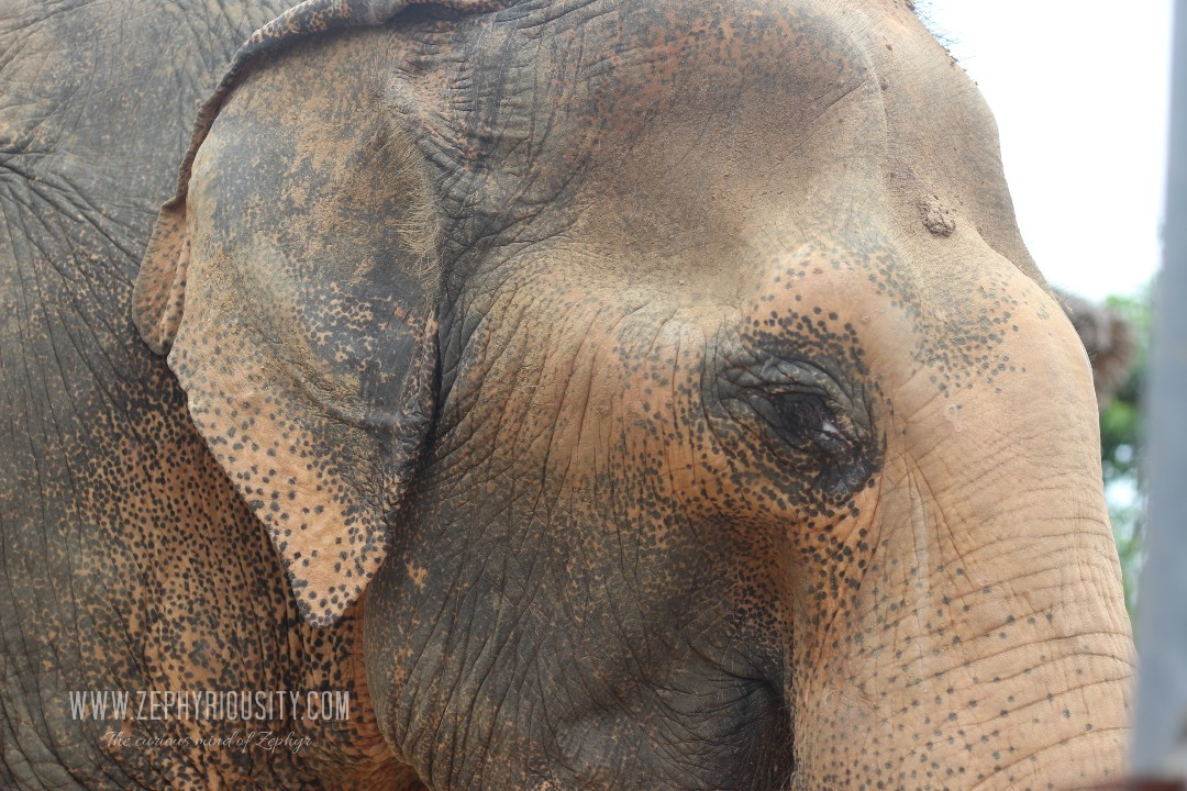 elephant sanctuary at wildlife friends foundation thailand