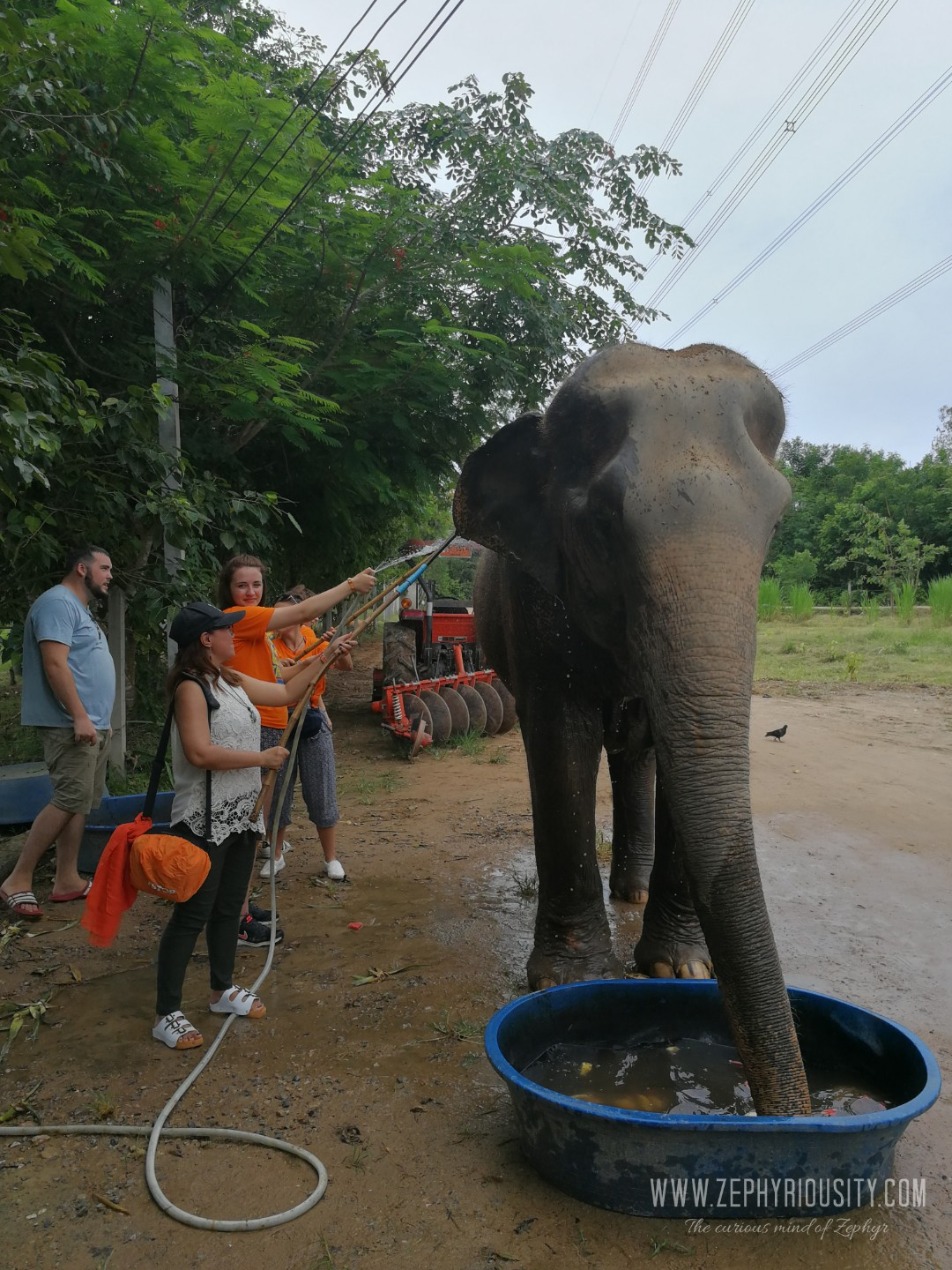 elephant shower at wildlife friends foundation thailand