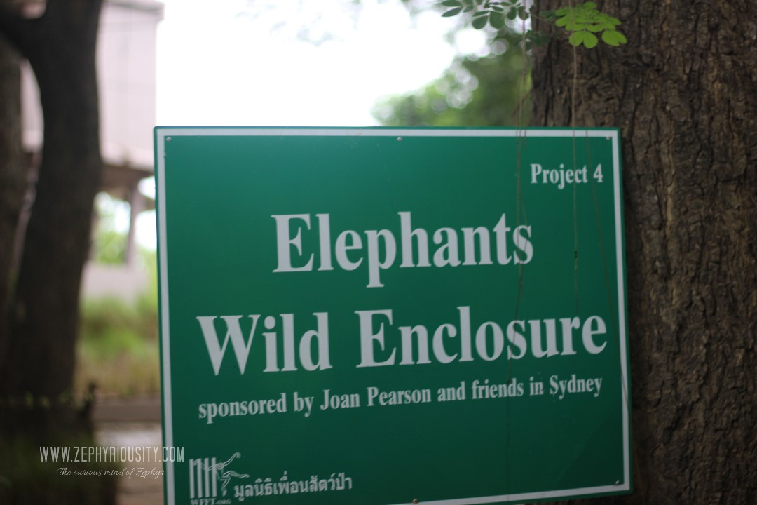 elephant wild enclosure wildlife friends foundation thailand