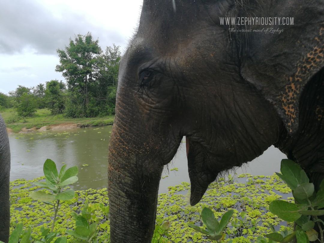 elephant wildlife friends foundation thailand
