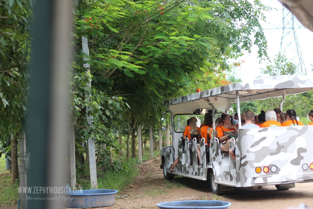 tour at wildlife friends foundation thailand