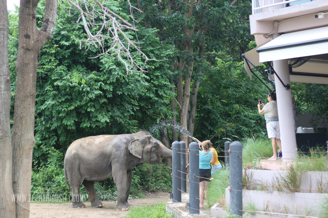 volunteer elephant shower at wildlife friends foundation thailand