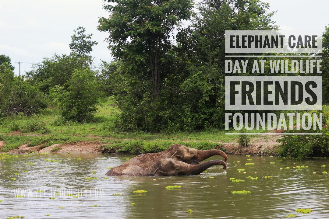 wildlife friends foundation thailand day tour june 2018