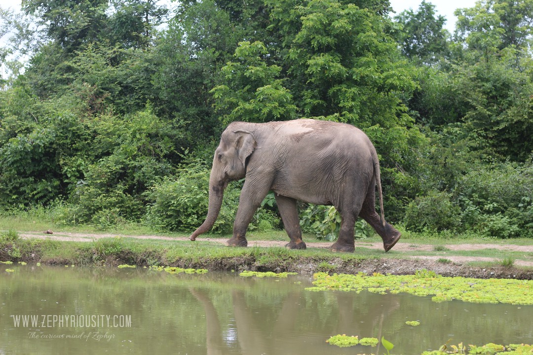 zephyriousity at wildlife friends foundation thailand with elephants