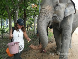zephyriousity feeding elephant at wildlife friends foundation thailand