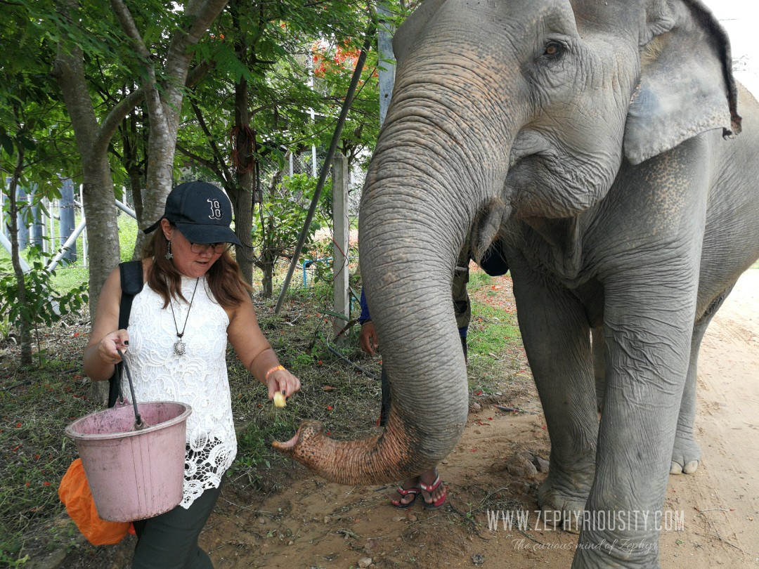 zephyriousity feeding elephant at wildlife friends foundation thailand