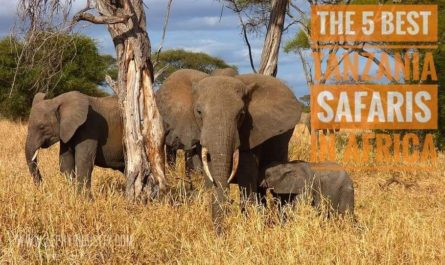5 OF THE BEST TANZANIA SAFARIS IN AFRICA