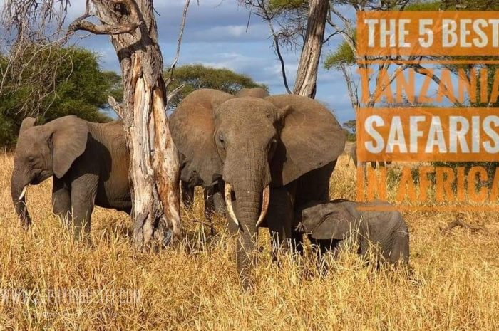 Guest Post: 5 Best Tanzania Safaris in Africa this 2020